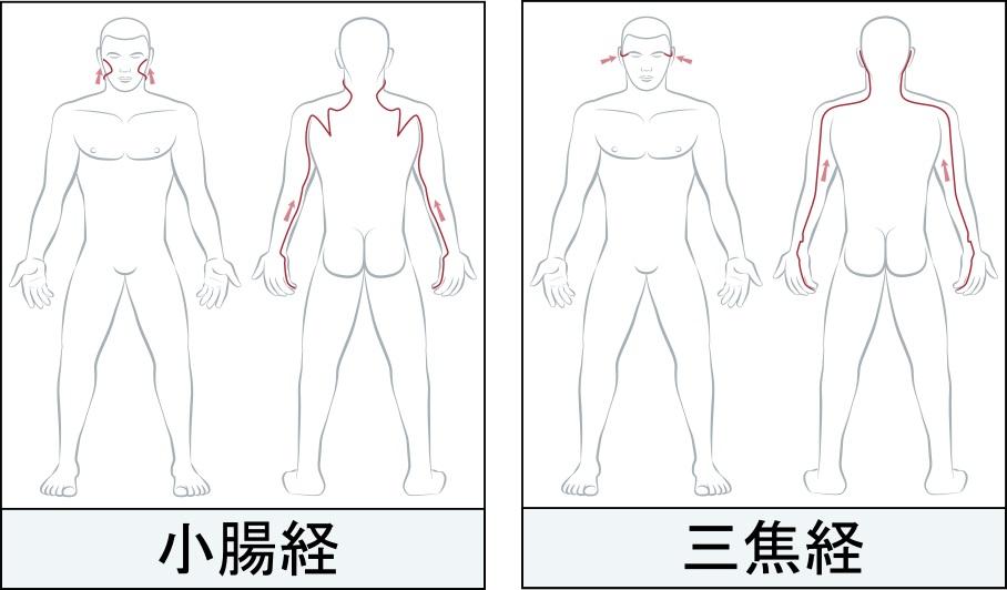小腸経と三焦経